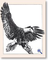 Drawing of Eagle by Dr. Deborah Watson